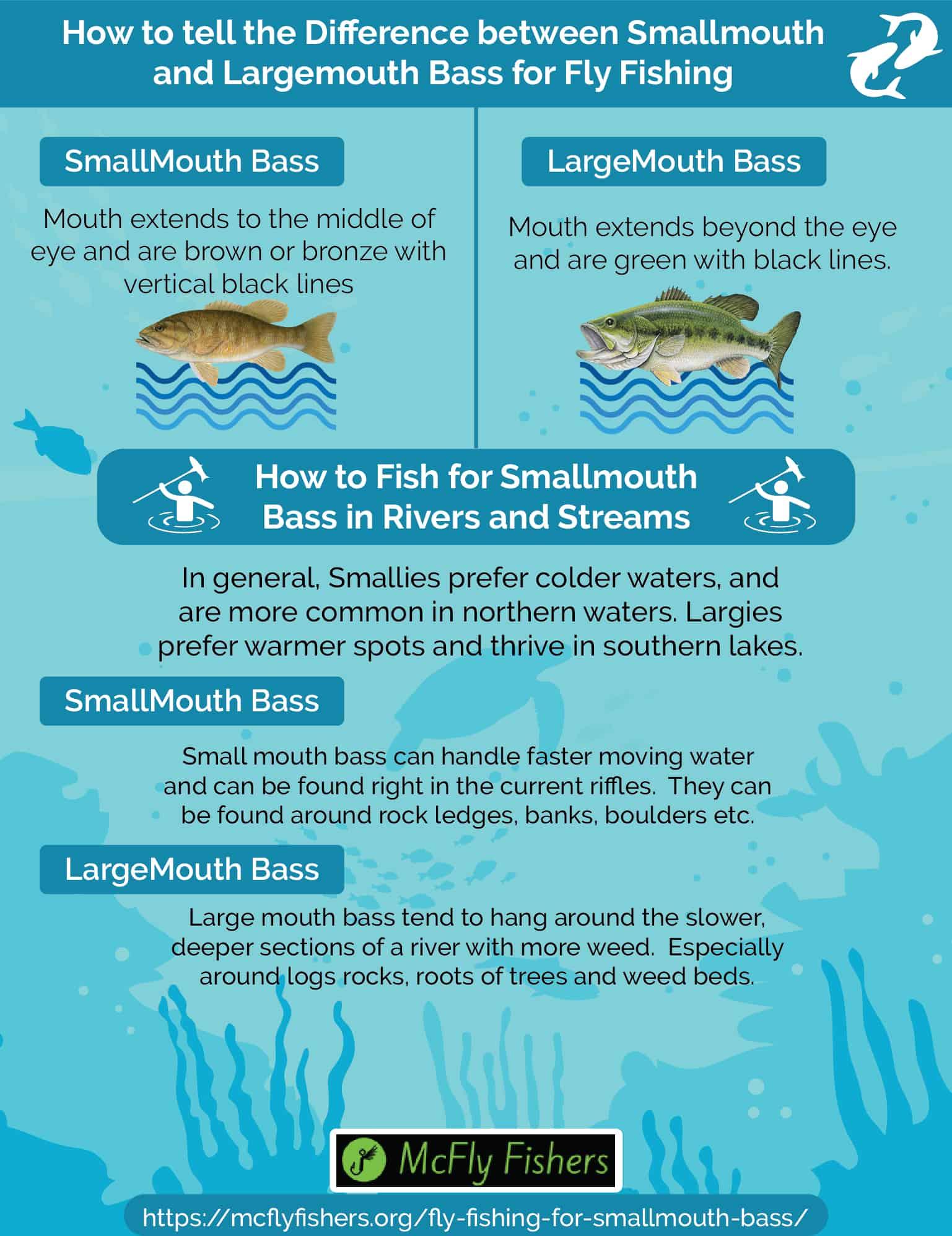 smallmouth vs largemouth bass identification